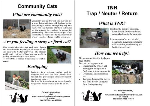 Feral Cat Week poster