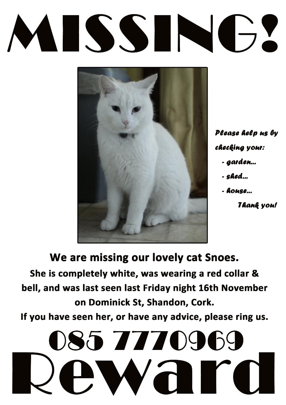 Cat Missing  Weeks