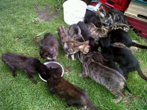 So many tabbies and blacks...