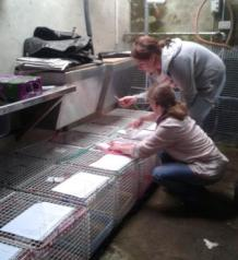 Sorting out and labelling the cages