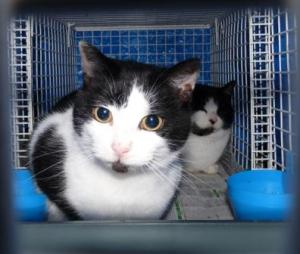 13 02 05 Cat 2 F web