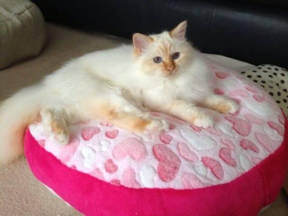 Pet bed pink
