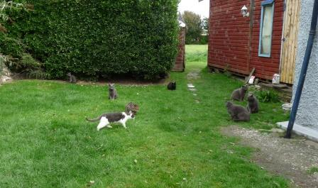 Colony of feral cats living happily.  The cat at the front was only 3 months old when she was neutered.