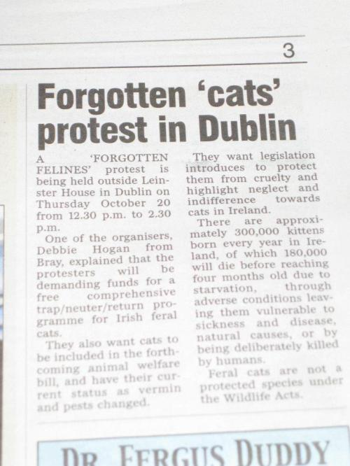 11 10 18 Article Forgotten cats protest