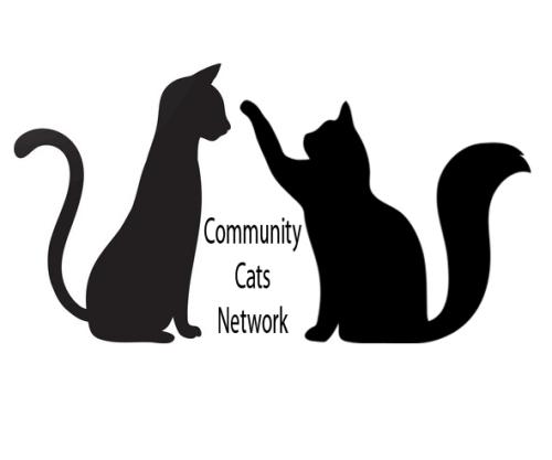 CCN logo_plain