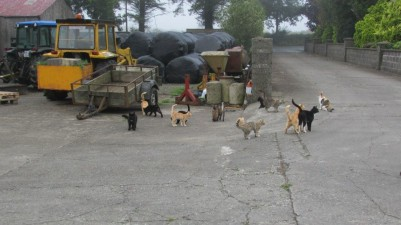 farms cats photo