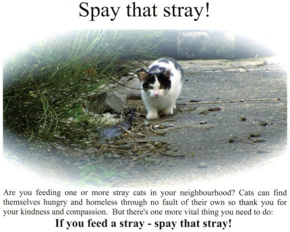 Spay that Stray