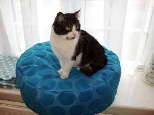 pet bed blue