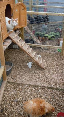 """If I hang out in the coop long enough, I might lay an egg!"" by Orlaith Franklin"