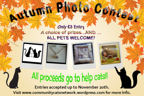 Photo competition 15 autumn