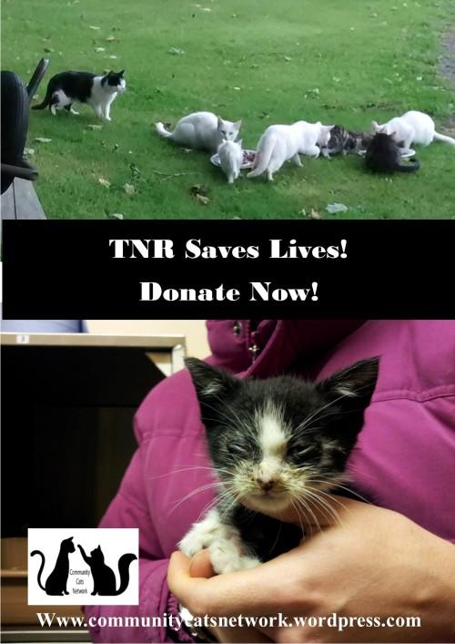 TNR appeal