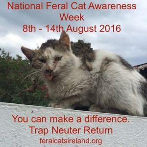 feral cat week
